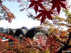 錦帯橋で紅葉狩り♪