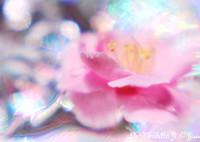 CANON Canon EOS Kiss X4で撮影した(光の魔法♪)の写真(画像)