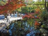 池と楓と鯉 伊勢神宮