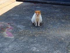 島の猫(娘、島に行く)