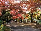 井の頭公園 紅葉とベンチ