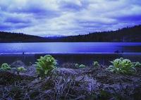 CANON Canon EOS M2で撮影した(雪解けのダム湖に緑を添えて)の写真(画像)