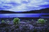 雪解けのダム湖に緑を添えて
