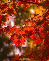秋の夕陽に照らされて