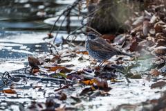 凍てつく池