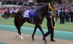 サウンズオブアース(第36回ジャパンカップ(GⅠ)出走馬)