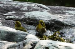 岩盤天然水家族風呂
