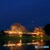 飯給夜桜朧月