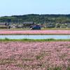 ピンクの絨毯とルーテシア 2
