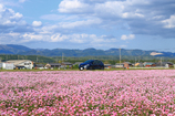 ピンクの絨毯とルーテシア 3