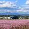 ピンクの絨毯とルーテシア 4