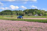 段々レンゲ畑