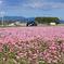 ピンクの絨毯とルーテシア 1