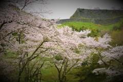 荒城の桜 - 巡る盃 影さして -