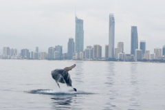 whale leeping