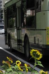 市バスとひまわり