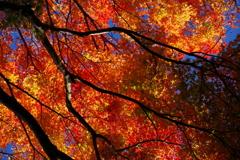 暖色の季節