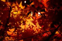 秋色の季節