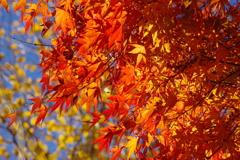 秋のオレンジ