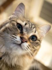 猫カフェ、キメ顔