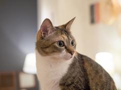 猫カフェ、自然体