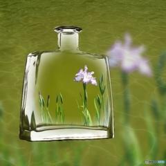 花菖蒲のボトル詰 ♪