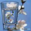 桜風味のお水はいかが?