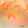 秋を水彩画風に