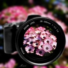 写真に写りたいお花の皆様は、こちらへ全員集合!