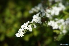春の訪れを告げる花