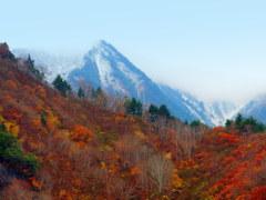 雪と紅葉のコラボ