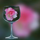 グラスシリーズ 秋薔薇