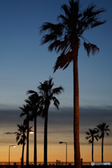 夕景ではなく、夜明け前の撮影です