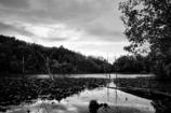 原始の森と湖をイメージして