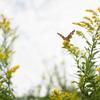 森に棲む蝶をイメージして