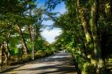 西日の公園歩道
