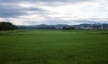 曇天 朝の散策