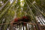 竹林の大生け花