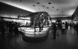 NY 自然史博物館へ行ってみた