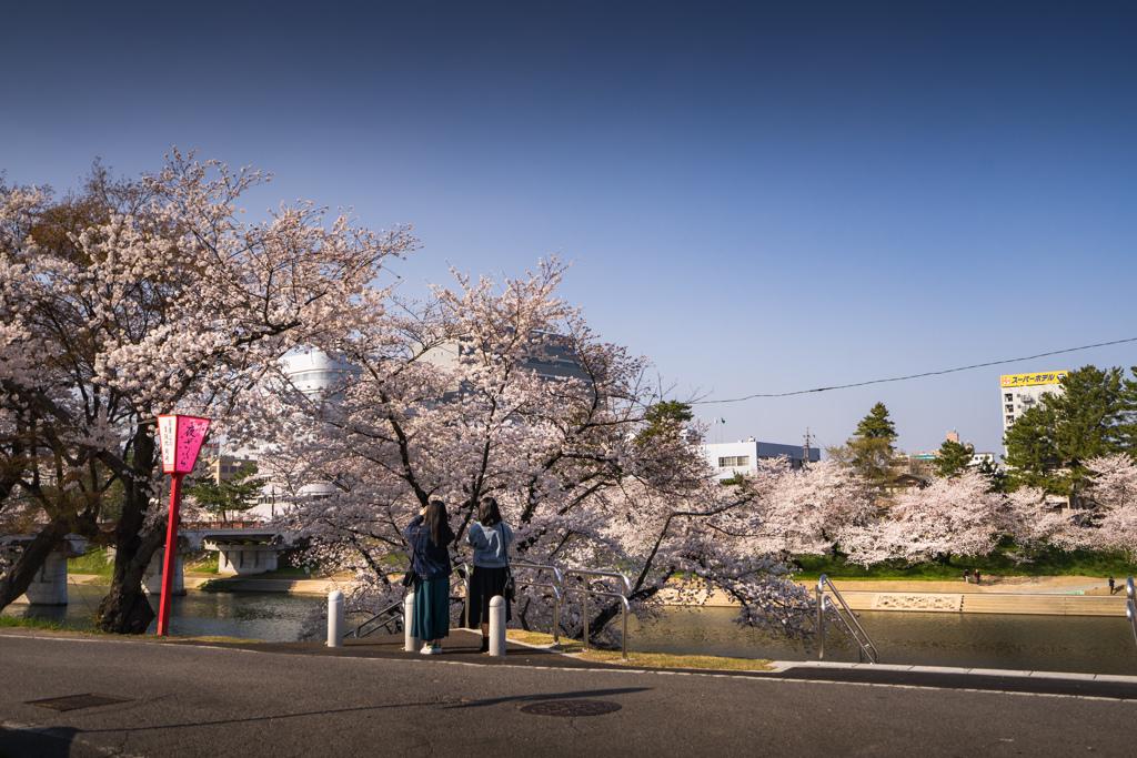 花見 散策 1