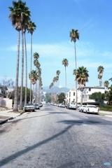 ヤシの木のある通り LA CA