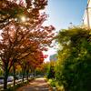 沿道の紅葉
