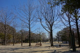 人の少ない公園