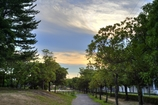 黄昏時の公園 オールドレンズの調子は如何?