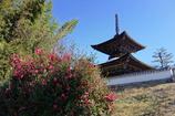 葵紋のあるお寺