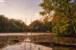昼下がりの池