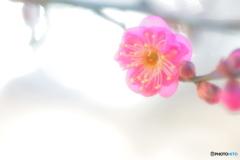 **春恋し**