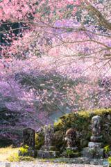 春色の境内Ⅱ