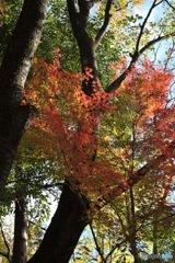 石神井公園の紅葉6