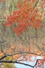 石神井公園の紅葉3